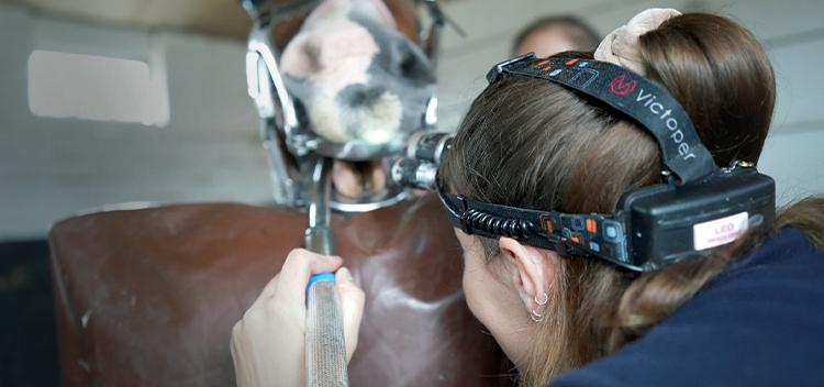 Expert dental care for your horse