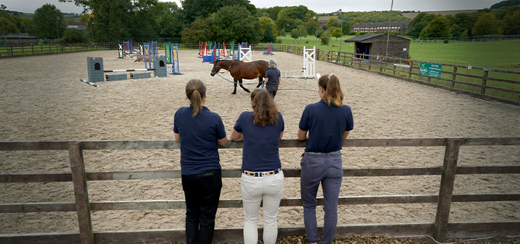 About our ambulatory equine vet practice in Frome