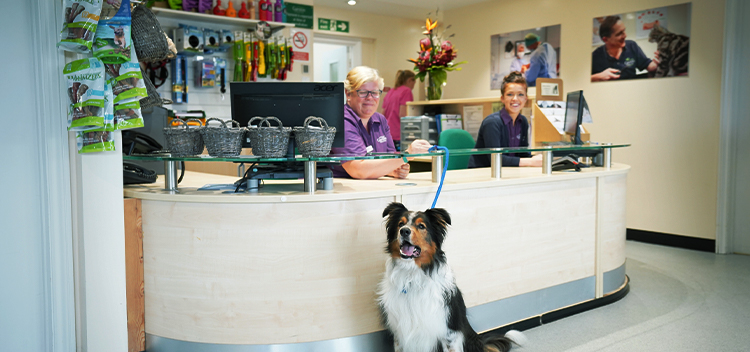 Garston Veterinary Group is an RCVS Accredited Practice