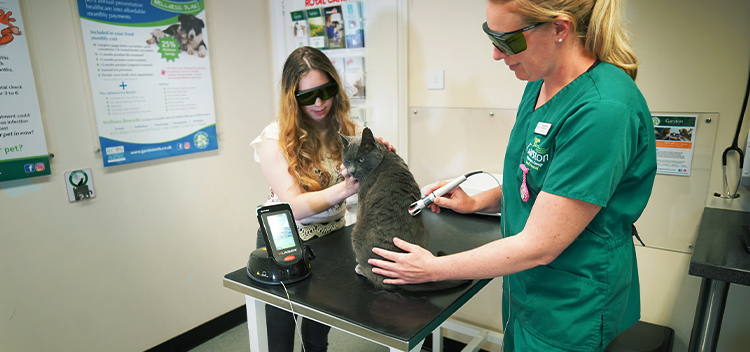 Laser Therapy for pets in Somerset & Wiltshire