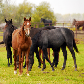 Understand the RCVS/BEVA's five stage equine vetting process
