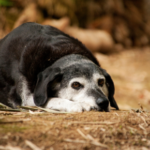 Is your older dog suffering in silence from arthritis? Spot the signs