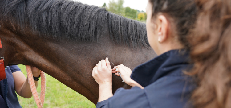 Vaccinations for horses, ponies and donkeys